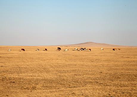 ☎重庆到内蒙古旅游,内蒙呼伦贝尔+额尔古纳湿地+满洲里+呼伦湖+室韦四飞7日游【醉美草原】