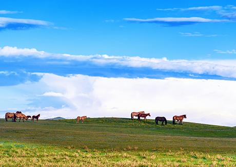 ★重庆到内蒙古旅游,内蒙辉腾锡勒大草原、银肯响沙、成吉思汗陵双卧6日旅游报价