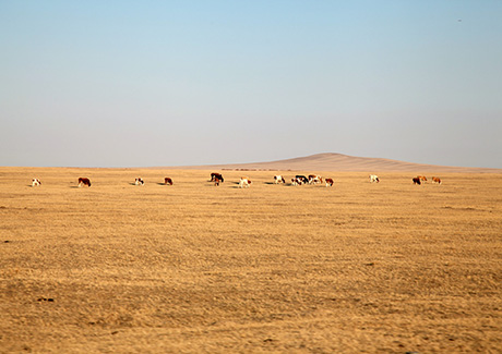 @重庆到内蒙旅游,希拉穆仁大草原、银肯响沙湾双飞四日游【草长莺飞】