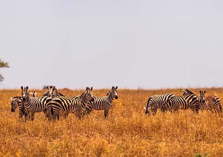 ★重庆到非洲旅游,非洲肯尼亚体验动物国度,轻奢深度10天之旅游!