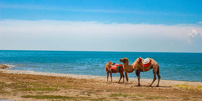 海东旅游景点,海东旅游攻略,海东旅游景点大全
