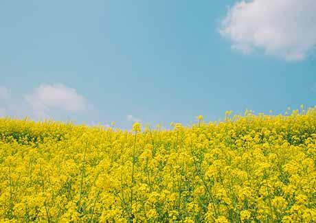 ☎重庆北固油菜花+中国傩城一日游[重庆周边赏花旅游](暂不发团)