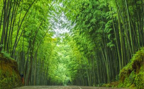♬重庆到蜀南竹海旅游,蜀南竹海+花田酒地+清溪谷漂流二日游